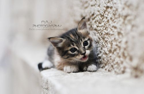 Cute cat - M.A.J photography