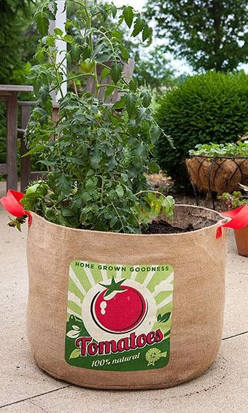 tomato grow bag to be bags and burlap. Black Bedroom Furniture Sets. Home Design Ideas