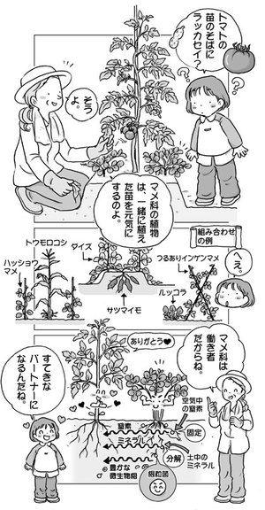 家庭菜園イラスト 植物栽培 家庭菜園 菜園デザイン