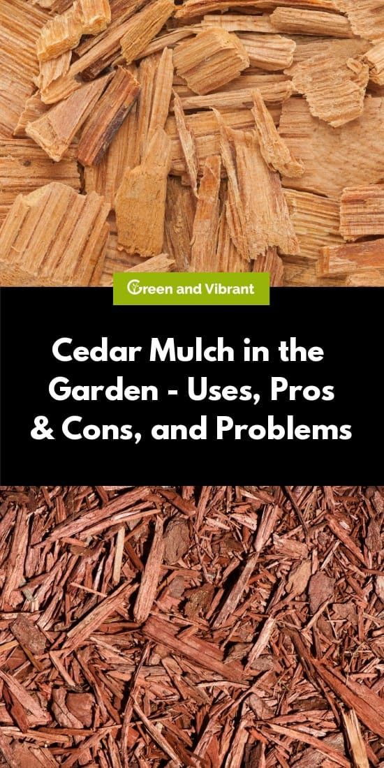 Cedar Mulch In The Garden Uses Pros Cons And Problems Trees Com Wood Chip Mulch Mulch Landscaping Wood Chips Garden