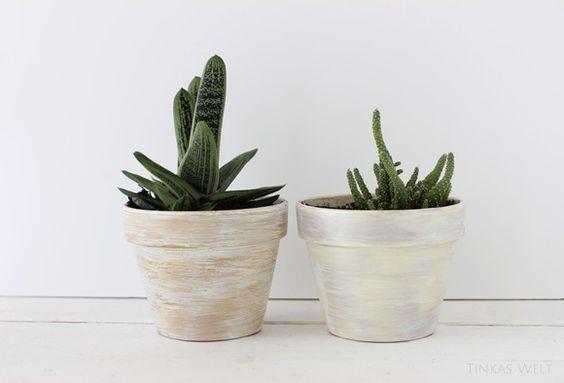 Wüstenfüchse wie wir? Dann sollten jetzt unbedingt #Kakteen bei euch einziehen. Wie sich die stacheligen #Zimmerpflanzen #dekorieren lassen, seht ihr hier!