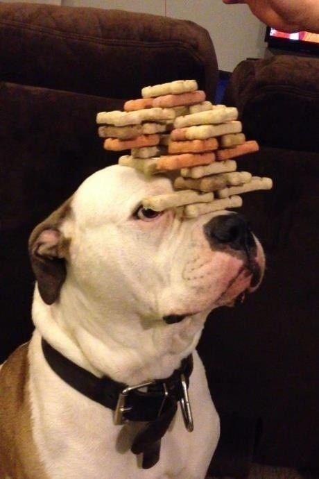 Who's a good boy? Self control - he's got it