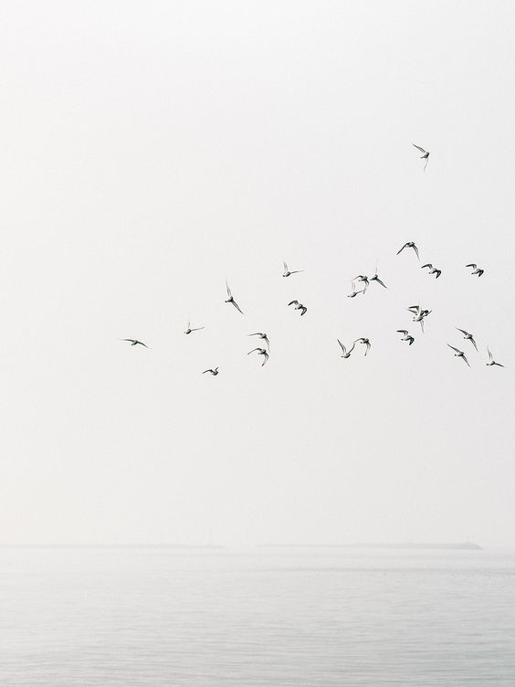 Envol d'oiseaux