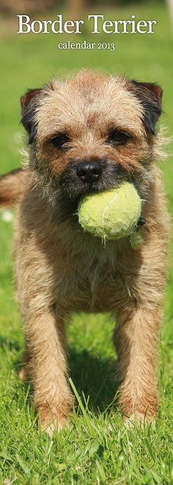 Border Terrier Kalender Slimline 2013