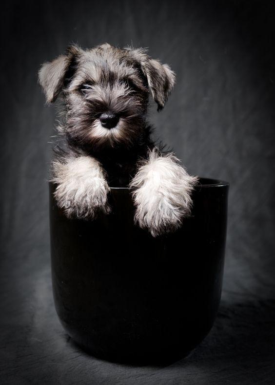 wirey-haired dog