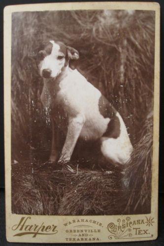 Antique Corsicana Texarkana Tx Terrier Puppy Artistic Early