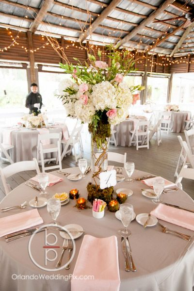Best 25 orlando wedding venues ideas on pinterest florida best 25 orlando wedding venues ideas on pinterest florida wedding venues wedding ideas in florida and florida agriculture junglespirit Gallery