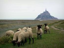 Prés salés Mont Saint Michel