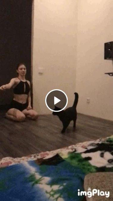Gato dançando Rep gira igual pião