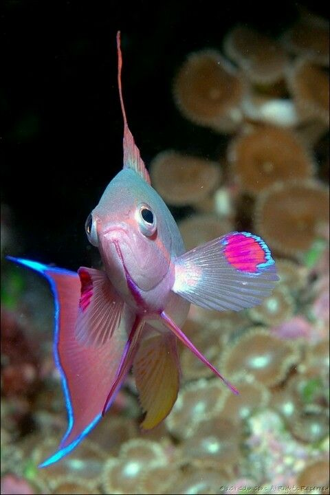 The 16 Most Beautiful Fish Pictures