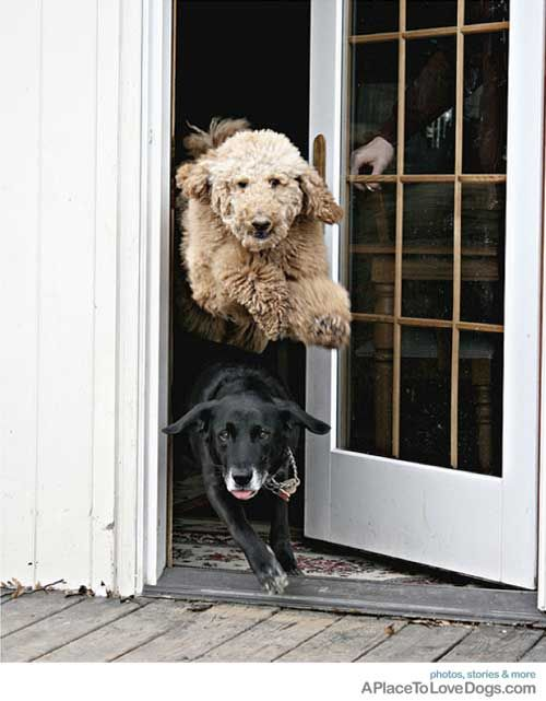 And...we're off! #happydogs #dogfriends