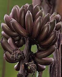 Resultado de imagen de plátano colorado