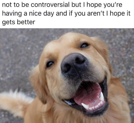 Wholesome Animal Memes Are The Definition Of Happiness 17 Memes Tiere
