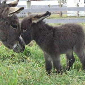 Funny Donkey Pictures with Captions | ... captions funny donkey pictures with captions funny donkey pictures