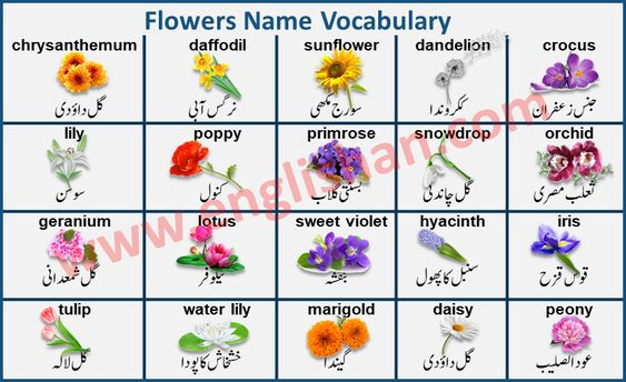 Flowers Name With Images In Urdu To English Pdf In 2020 Grammar And Vocabulary Vocabulary Flash Cards Learn English Grammar