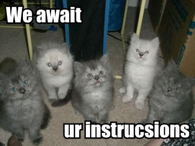Funny Picture Clip: Very Cool Funny Cat Pictures with Captions