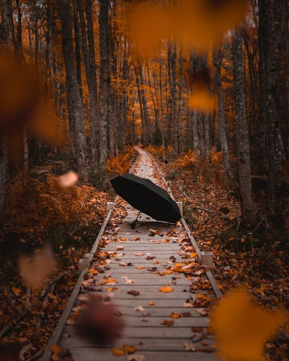 acadia-national-park-jessup-trail-umbrella