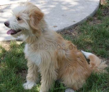 Hund, k.A. (Mischling, Rüde, 2 Jahre) Ungarn - Gregor von kettenlos