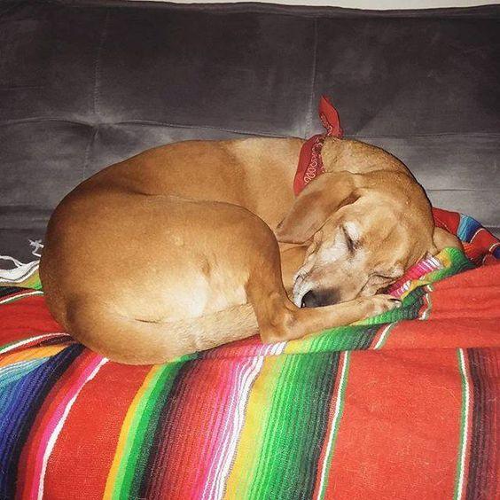 Snug as a bug on a rug! Found at: http://bit.ly/1Ro1cJB #rescuedog #dog #itsarescuedoglife