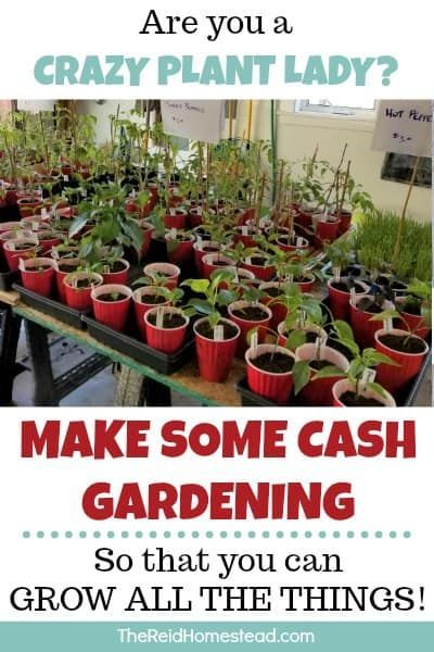 How To Make Money Growing Plants At Home An Easy Side Hustle