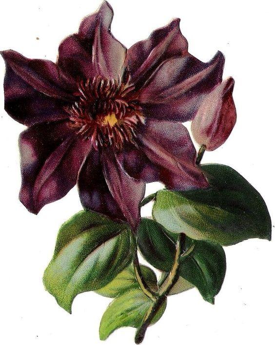 Oblaten Glanzbild scrap die cut chromo  Blume flower 12cm
