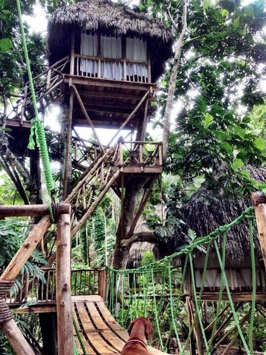 trees dominican republic and tree houses on pinterest