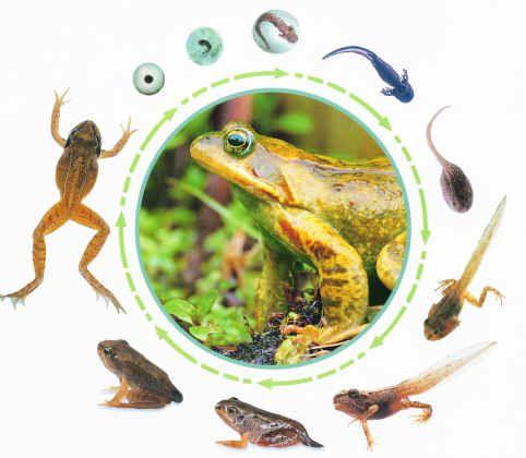 Vom Ei Zum Frosch Thema Natuur Kikker