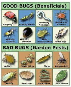 Good bugs or bad bugs in your garden?   Natural Garden Pest Control