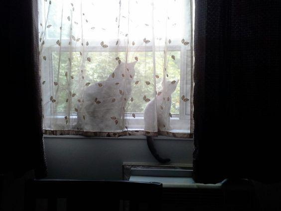 Windowsill Bird Watching