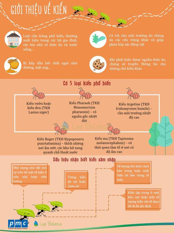 Giới thiệu về kiến - Life Balance - PMC - Dấu hiệu nhận biết kiến xâm nhập - 5 loại kiến phổ biến - Đặc điểm cơ bản về kiến #KIEN #PHONGTRUKIEN #LIFEBALANCE #PMC