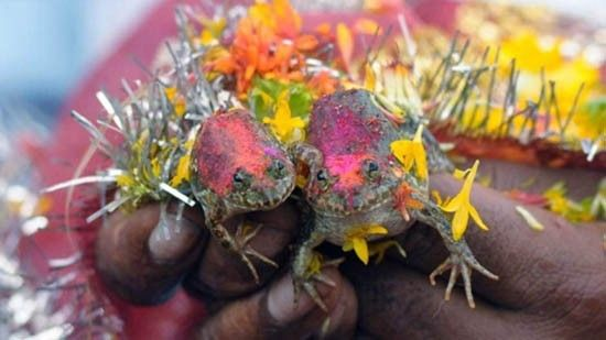 Married Frogs!? Check out this weird wedding story from our blog :-) More like this on our blog as well as fun tips and ideas :-) Happy reading!