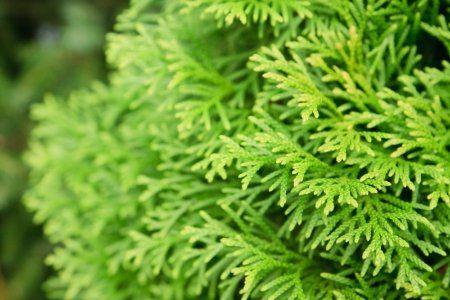 How to Plant Evergreen Shrubs | DoItYourself.com