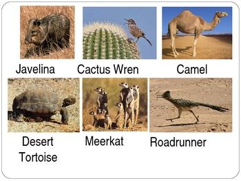 Desert animals pictures and names - photo#11
