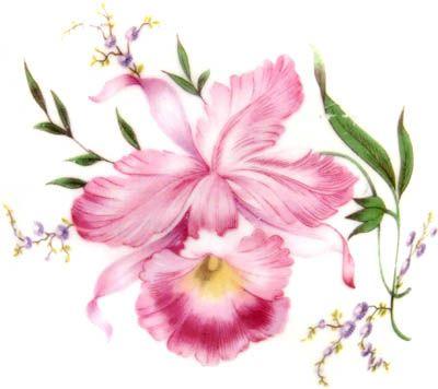 Porcelana Brasil: teacup tuesday - Porcelana Real u gosto muito do decalque usado na decoração, com uma bonita orquídea rosa, provavelmente inspirada em um exemplar do gênero Laelia.