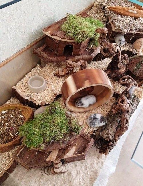 Tipps Und Diy Ideen Zum Hamsterkafig Einrichten Hamster Selbstgemachte Pluschtiere Hamster Ideen