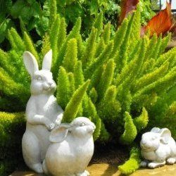 The foxtail fern is an evergreen drought resistant plant that needs little care and looks bright green all year long. It is also known as Asparagus...