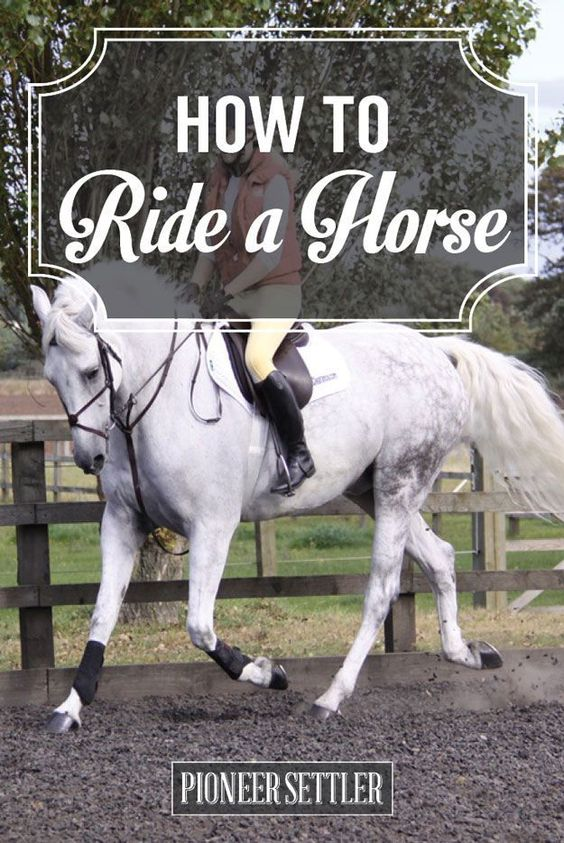 Check out Horseback Riding The Right Way | How to Ride A Horse at http://pioneersettler.com/horseback-riding/