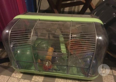 Toutdonner Com Le Site De Dons Ou Tout Donner Tout Recuperer Le Tout Gratuit Cage Hamster Hamster Tout Donner