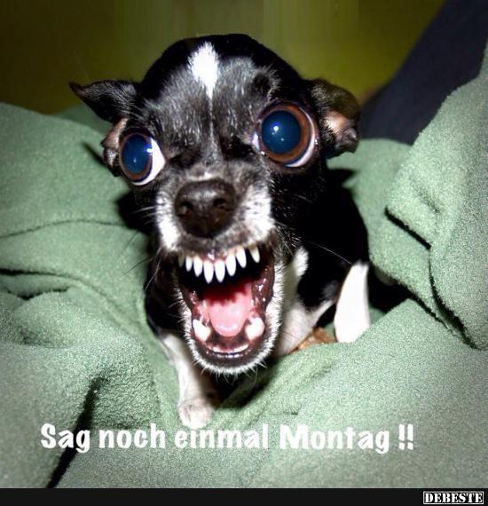 Sag noch einmal Montag !!