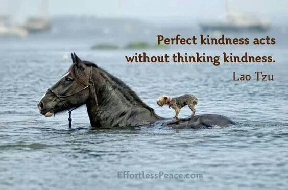 Perfect kindness acts without thinking kindness.