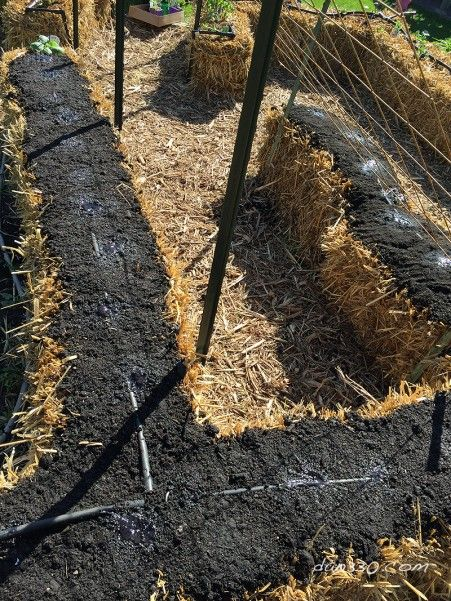 How To Seed A Straw Bale Garden Gardens Pictures And Plants 400 x 300