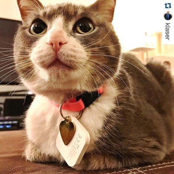 Hello bright eyes - #Repost @klaser  Steely is officially a #kittyconvict and a @tiledit wearer. #tiledit #catsofinstagram #tiledit  www.thetileapp.com