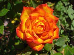 Apaixonados por flores - Comunidad - Google+