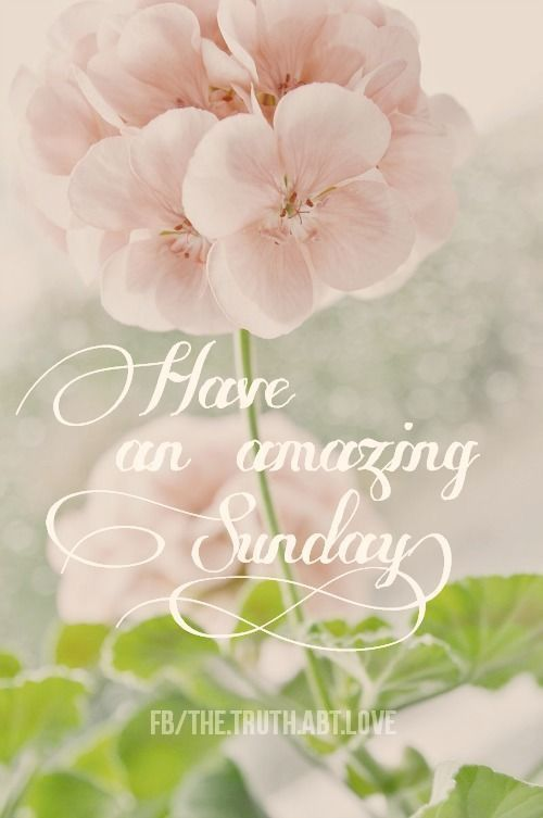 Good Morning And Happy Sunday Have An Amazing Day!
