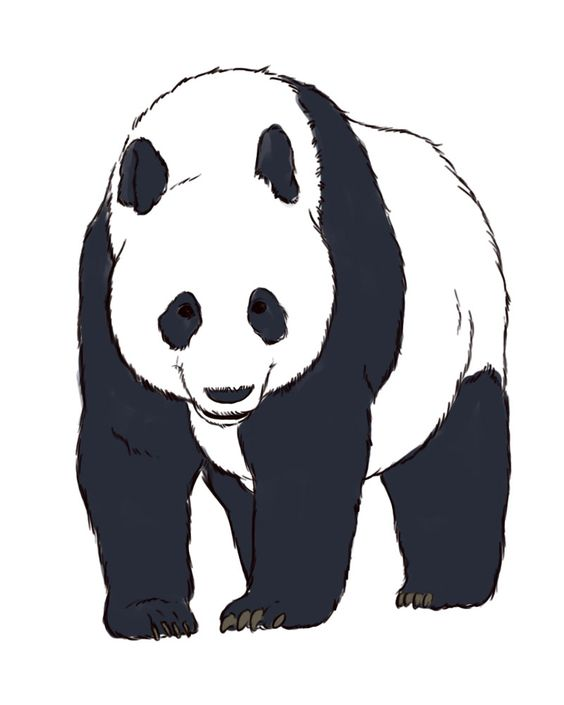 How to draw realistic, Panda bears and How to draw on Pinterest