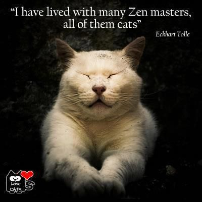 \u0026quot;I have lived with many Zen masters, all of them cats\u0026quot; ,,