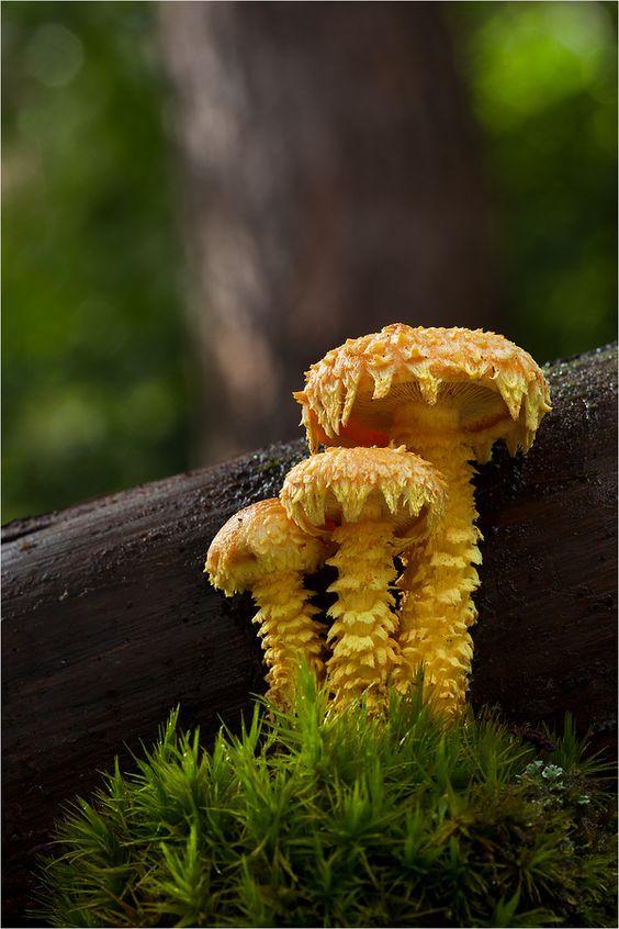 Yellow #mushrooms. A bit creepy but so beautiful!