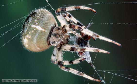 Pinterest the world s catalog of ideas for Garden spider egg sac