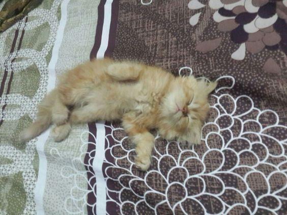 My sweet little pinny sleeping