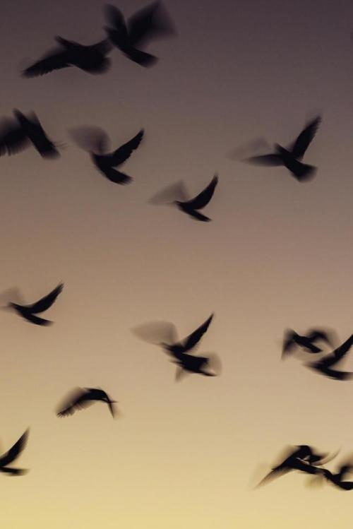 Las Mejores Imagenes Que Te Muestran La Belleza De La Naturaleza Puedes Usarlas Como Fondo De Pantalla O Impirmirl Birds In Sky Birds In The Sky Sky Wallpaper Birds in sky desktop wallpapers free